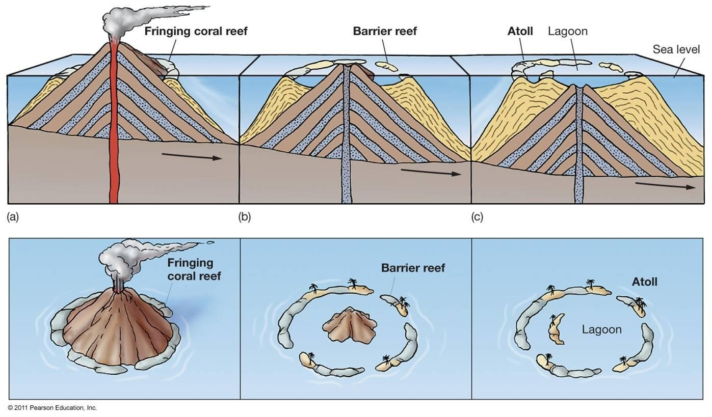 diagram of types of insects atoll : geology types of reefs diagram