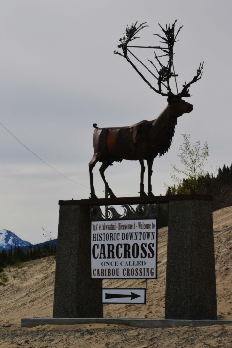 From The Artist Who Made Metal Horse Daphne Mennell Present Caribou And My Apologies For Atrocious Zoomgif Movie