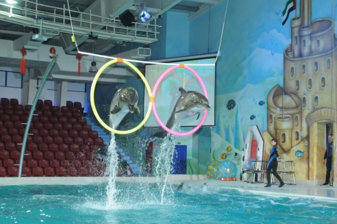 Dolphin And Chinese Circus Show