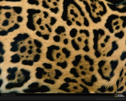 Close Up Jaguar Pattern Brazil Patterns