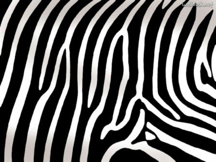 Zebra Print Widescreen Animal Print Www Moyuccom